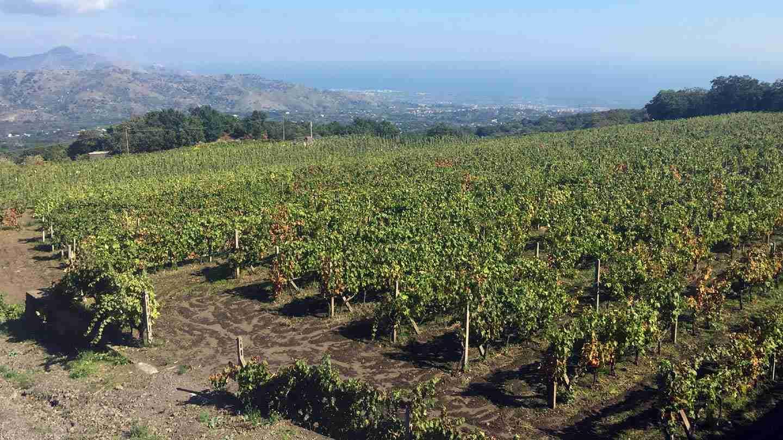 etna wine tour experience